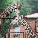 CPO LT sėkmingai atliko Lietuvos zoologijos sodo rekonstrukcijos darbų viešąjį pirkimą
